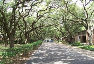 Rice Univ Tree Tunnel